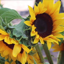 The Dylan Schopp Sunshine Foundation: Sunshine at the Park 2018